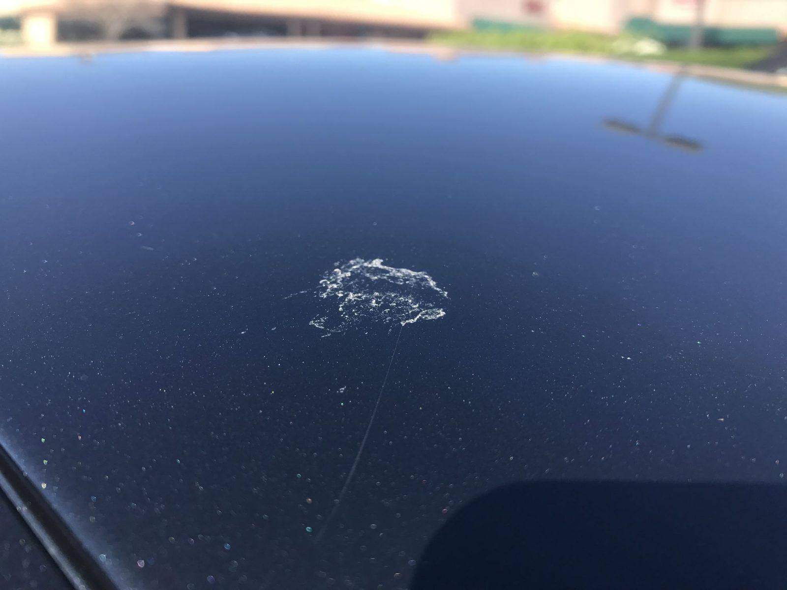 Bird poop on car