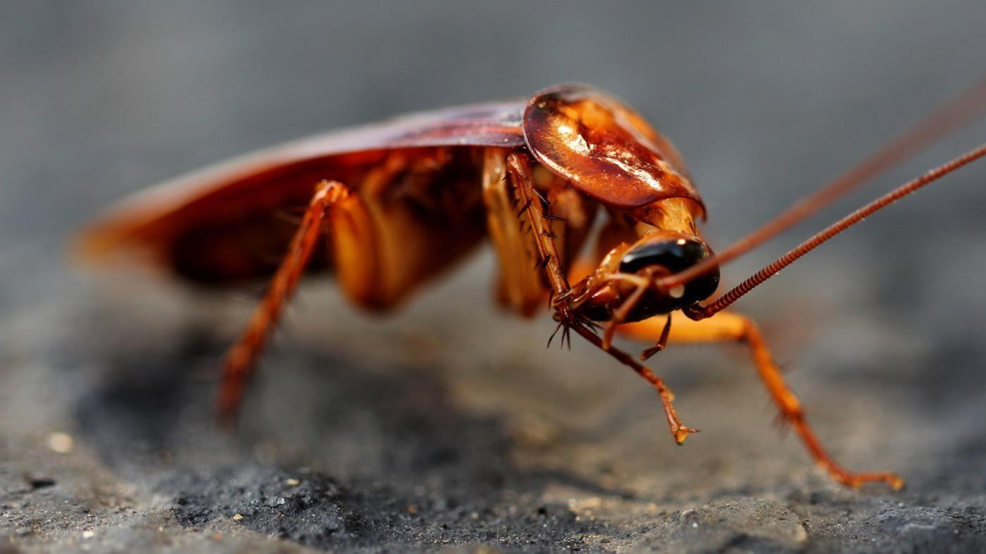 How To Get Rid Roaches In Car