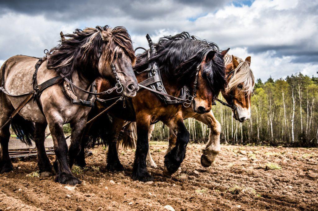 Horse power name history