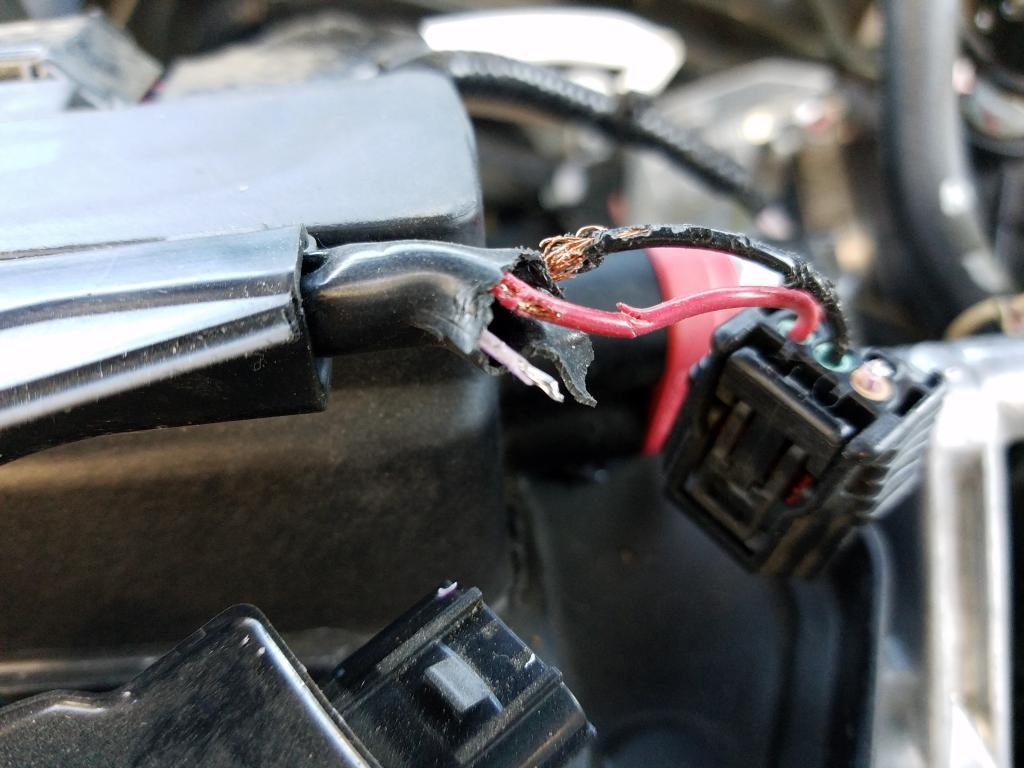 The Single Most Important Thing You Need To Know About HOW TO KEEP RODENTS OUT OF CAR ENGINE