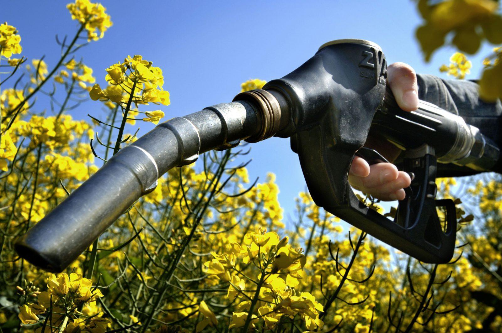 biodiesel rapeseed