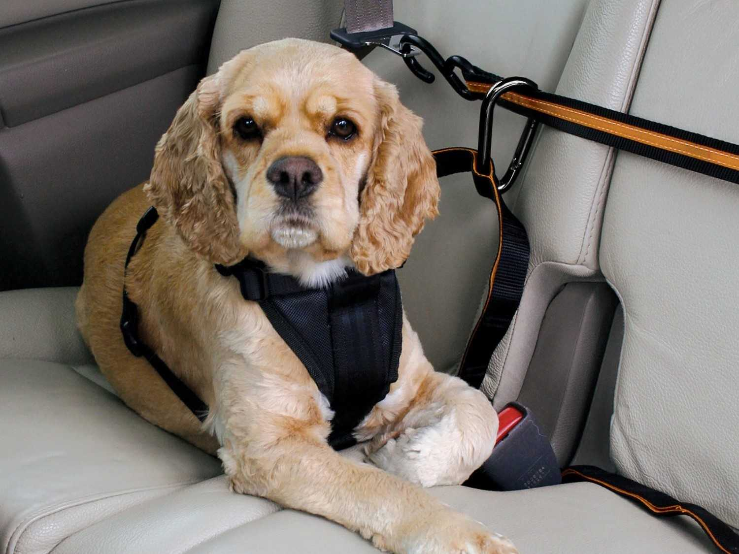 keep dog in back seat
