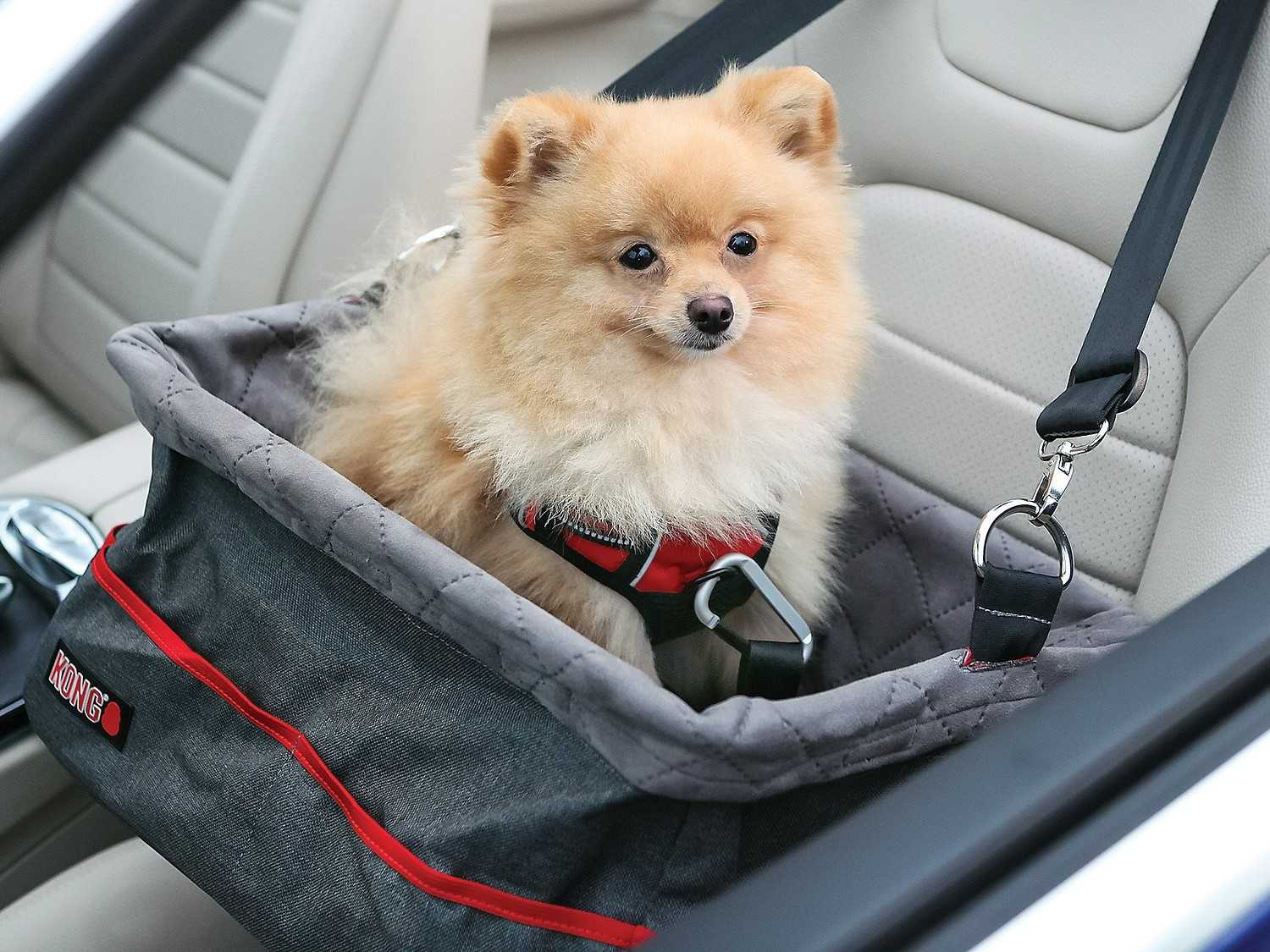 transporting dogs in cars