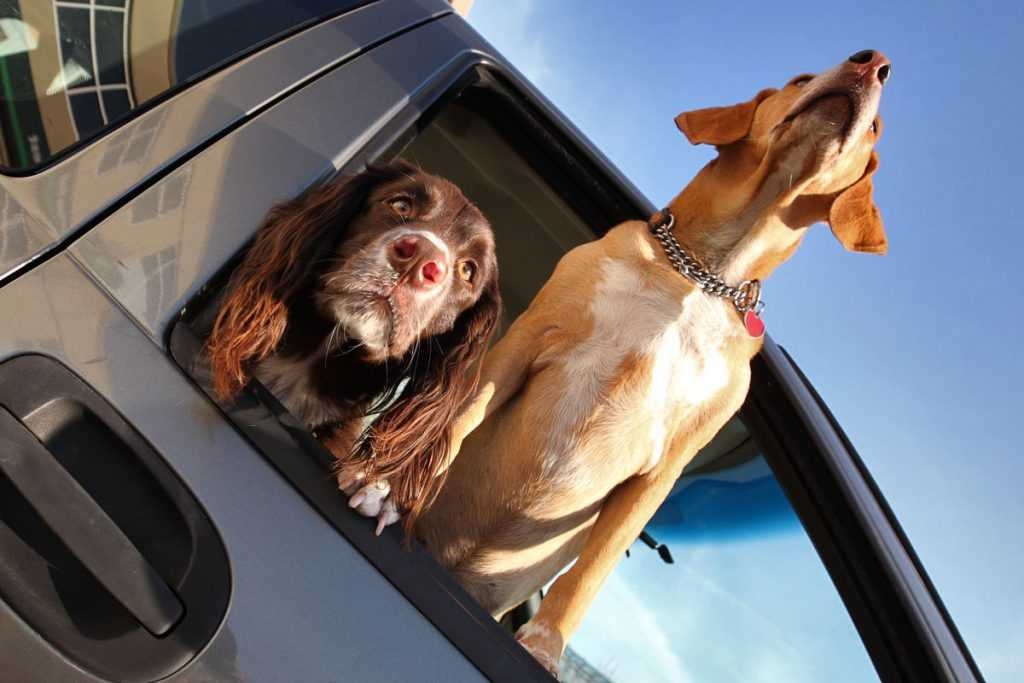 tips for traveling with pet in the car